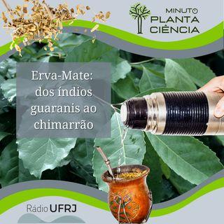 Minuto PlantaCiência - Ep. 08 - Erva-Mate: dos índios guaranis ao chimarrão (Rádio UFRJ)