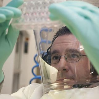 Isolati i super anticorpi, svolta sul Covid