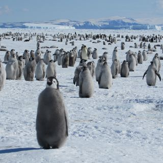 Mistero Antartide: un'oasi verde grande tre volte la Francia