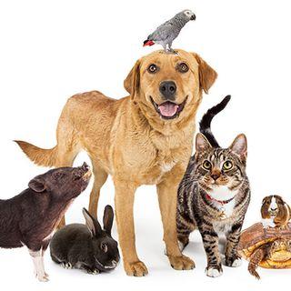 Escucha y adivina qué animal es....