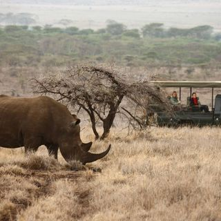 Wildlife plays an important role in balancing the environment