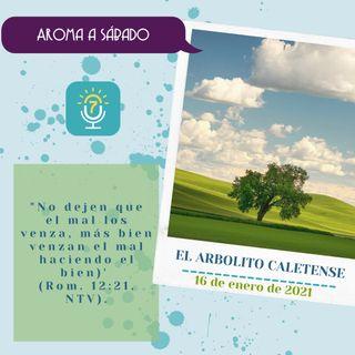 16 de enero - El arbolito caletense - Etiquetas Para Reflexionar - Devocional de Jóvenes