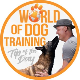 World Of Dog Training: Tip of the Day