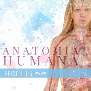ANATOMIA: Generalidades sobre o sistema esquelético