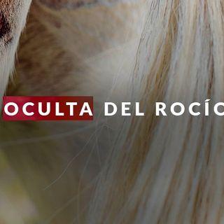 La muerte de 10 caballos y un buey en El Rocío reafirman la lucha contra el maltrato animal  #LaCafeteraSTOPMaltratoAnimal