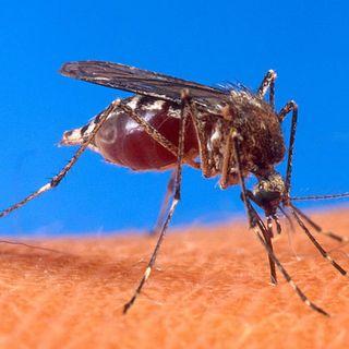 """Focolaio di febbre dengue in una famiglia. """"Stanno tutti bene"""""""