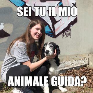 #cremona Cosa ti dice il tuo istinto animale?