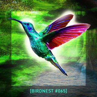 BIRDNEST #065   SsOunday in Deep Flight   Podcast by The Lahar