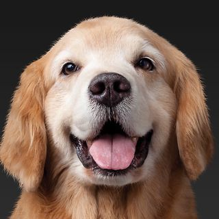 Why mostly people like animal? , Information of dogs.
