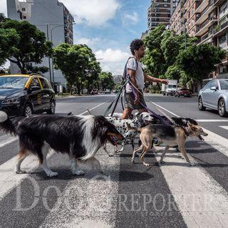 Buenos Aires | Paseador de perros di Alida Vanni