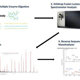 de novo antibody sequencing