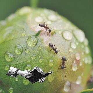 #1 Aprendiendo de la hormiga