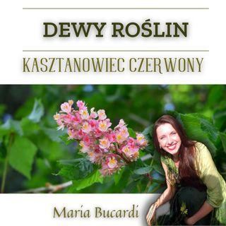 Dewy Roślin - Kasztanowiec czerwony - nadwrażliwość nadmierna troska | Maria Bucardi