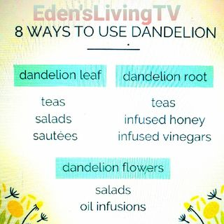Dandelions * 8 WAYS to USE for HEALTH