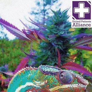 04-01-2015 Tramadol 0 Cannabis Oil 10