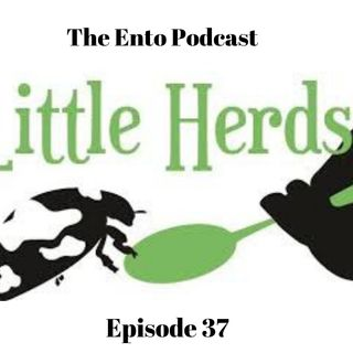 Episode 37 - The Ento Podcast