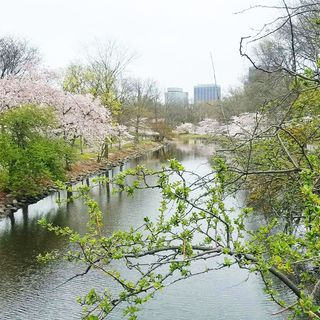 Cambridge Uses Geocaching To Showcase Treasured City Trees