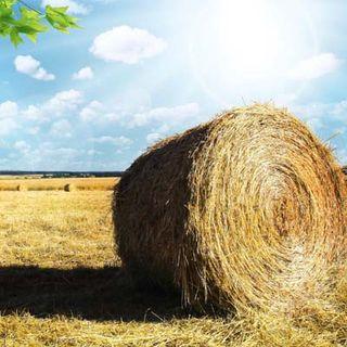 Tornare in campagna-perché
