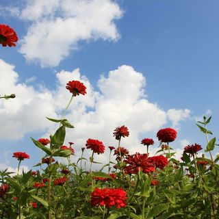 5 Great Reasons Why Staking Your Flowers is Important