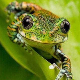 Buon inizio settimana in connessione con la rana 🐸 la purificazione 🌟💖😃