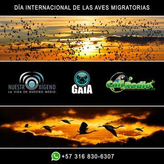 NUESTRO OXÍGENO Día mundial de las aves migratorias