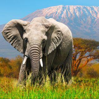 Capitulo 1- Mead@ por Un Elefante? Vas Bien!