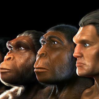 Evolution: Evidence (Part II)