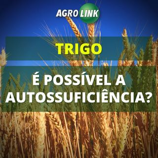 Brasil pode produzir todo trigo que consome?