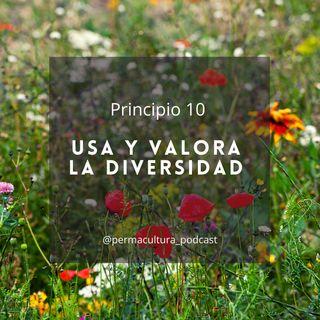T1E15 - Principio 10 Usa y valora la diversidad