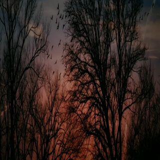 Ahmet ŞAFAK & Gazapizm - YALNIZ KURT (Mix)
