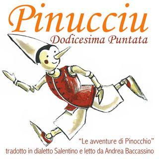 Pinucciu Dodicesima Puntata
