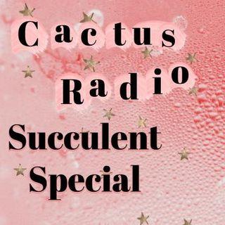 Succulent Special: Quarantine Edition