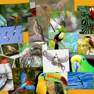 NUESTRO OXÍGENO Importancia de la biodiversidad - Ing Alberto de la Torre Ibañez