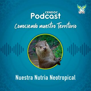 Nutria neotropical: insignia del territorio CAR