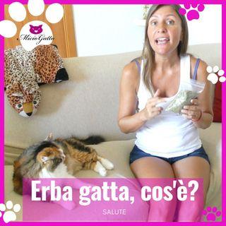 Erba gatta o catnip...cos'è e che effetti ha sul gatto?