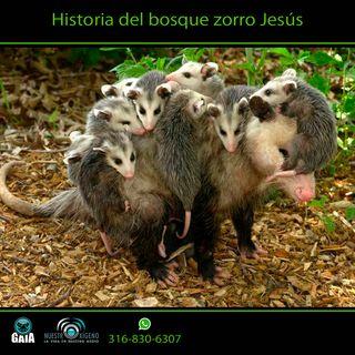 NUESTRO OXÍGENO Historia del bosque zorro Jesus - Biologa María Cristina Martínez