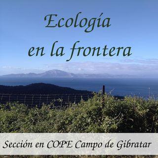 El mito de la ardilla que cruzaba España sin tocar el suelo - Ecologia en la Frontera #14 - 8/2/19