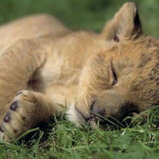 Episode 26 - Sleeping Animals