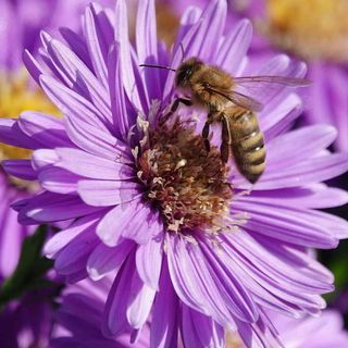 DIY Garden Minute Ep20 - Benefits of Fall Pollinators