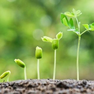 Lessons from the LIFE of a SEED
