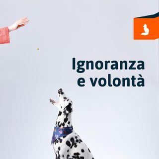 Volpi Digitali - Ignoranza e volontà