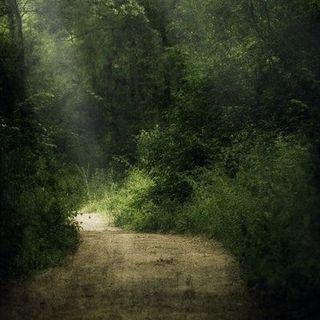 LC - Camminando. La via degli Dei e il cammino di Santiago