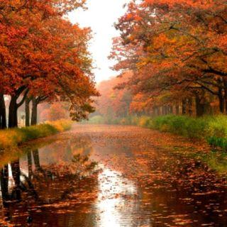 Por mi el otoño es...