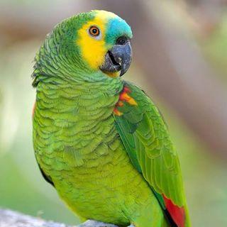 Aquela Do Papagaio Ventríloquo - Episódio 15 - Epístolas ao Horácio Castanhola