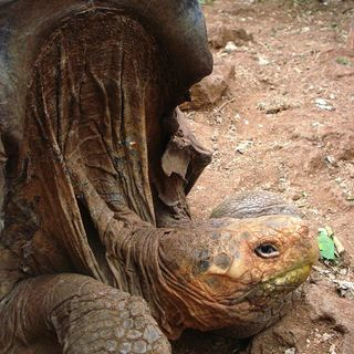 Lonesome George by Roger Jenkins