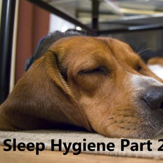 The Bridge #PODCAST #45  Sleep Hygiene- Habits to Live By