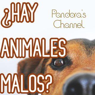 ¿Hay animales malos?