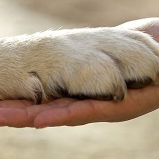 A Dog is Loyal.