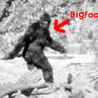 Paranormal With Pixie. Episode 1. Bigfoot