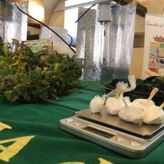 Trasforma in serra un alloggio per coltivare cannabis. Sequestrati 5 kg di piante e cocaina